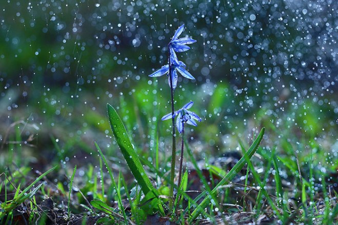 tips-for-shooting-flowers-rain-4