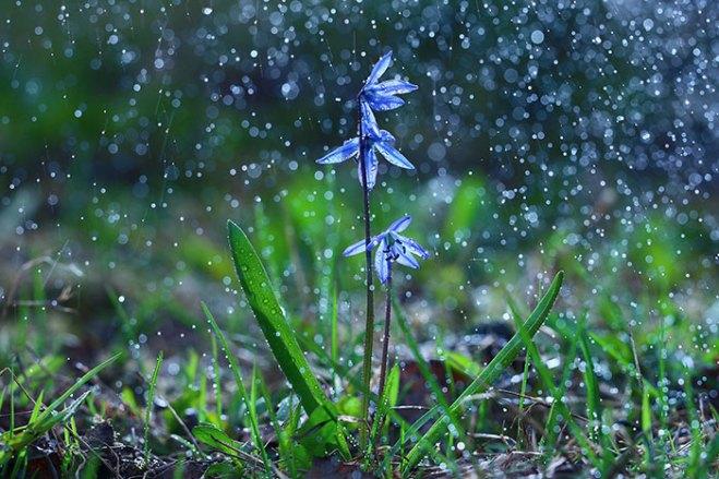 tips-for-shooting-flowers-rain-4